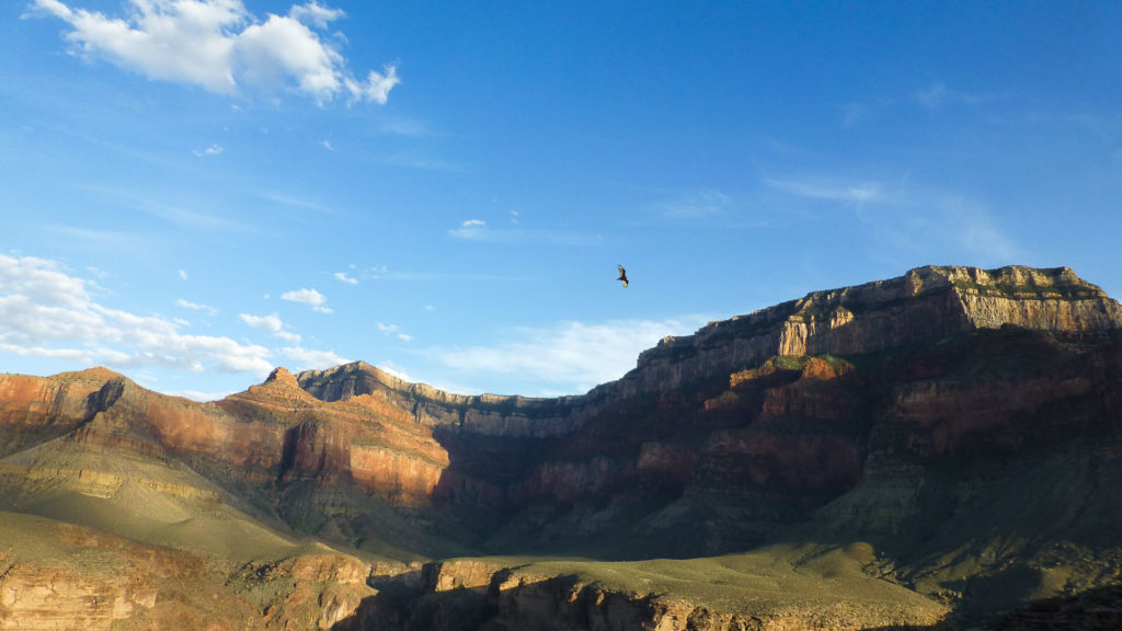 Ein Condor kreist über der Schlucht