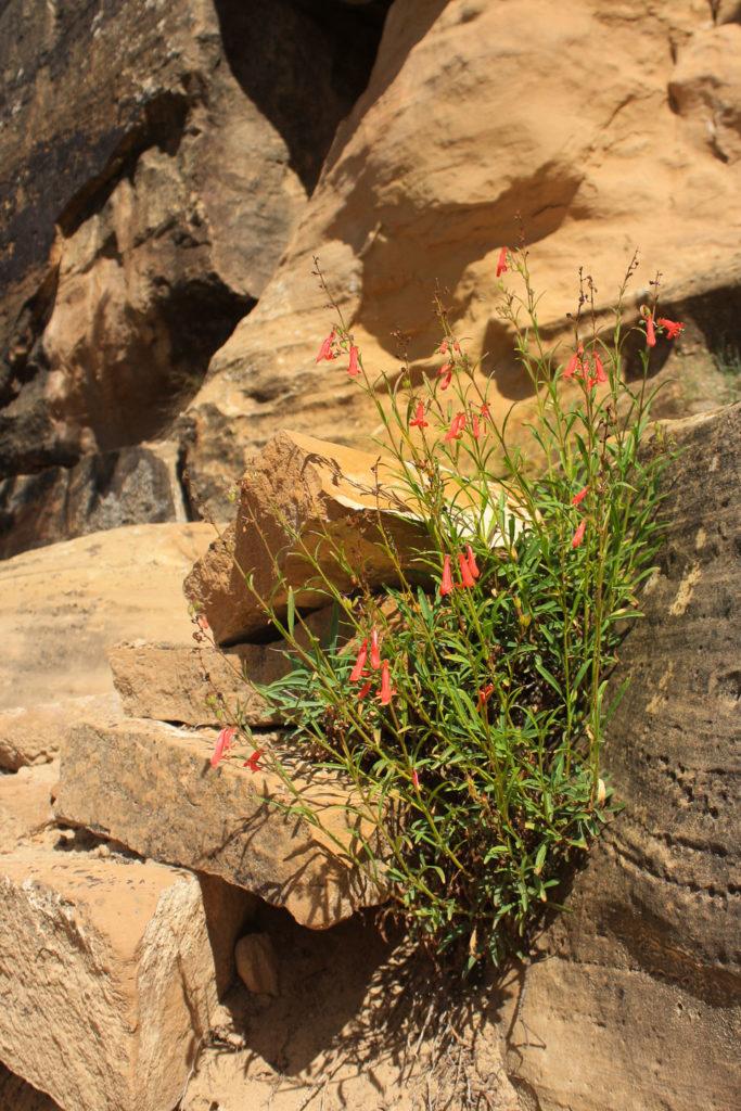 Etwas Blühendes am Trail