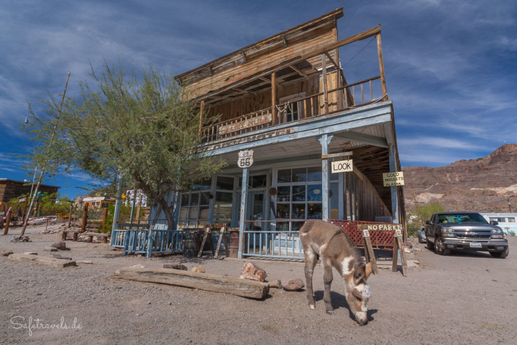 Wilder Burro in Oatman