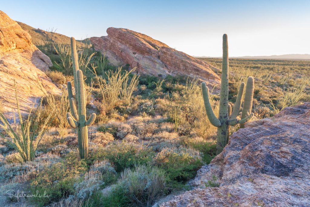 Saguaro National Park - Rincon Mountain District