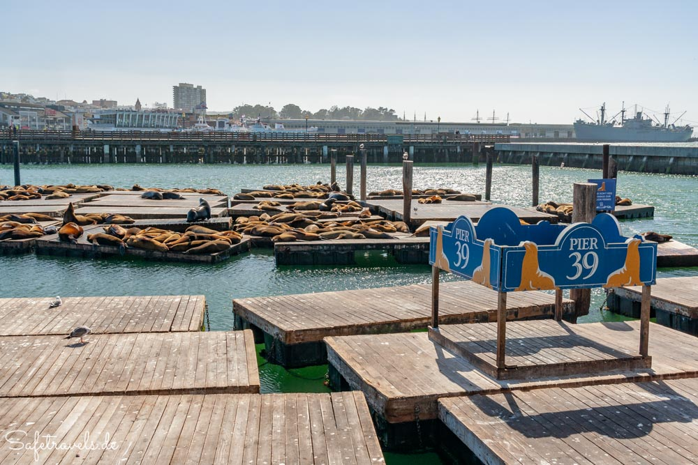 Pontons mit Seelöwen am Pier 39 in San Francisco