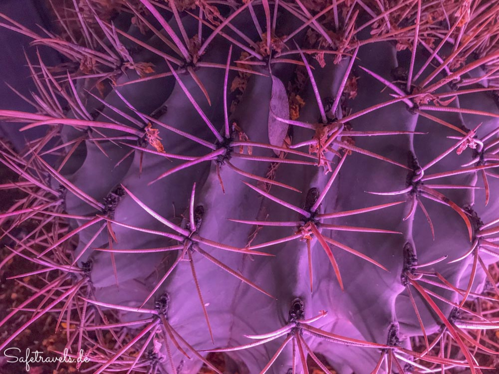 Desert Botanical Garden - Electric Desert - Spines