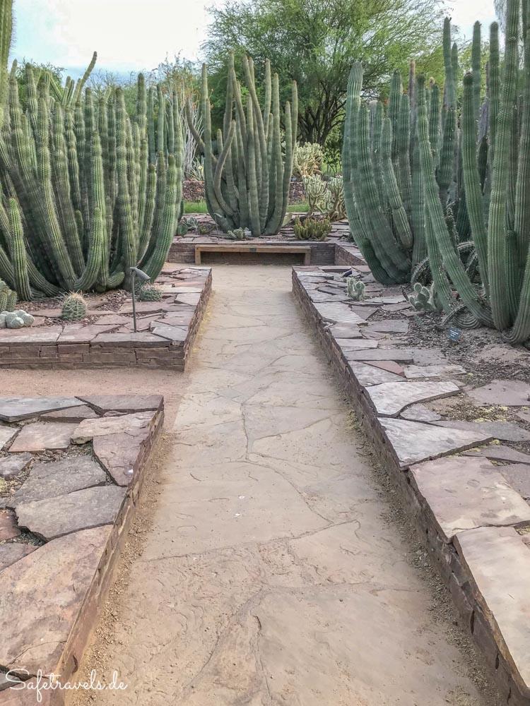 Desert Botanical Garden - Ottosen Entry Garden - Symmetrie