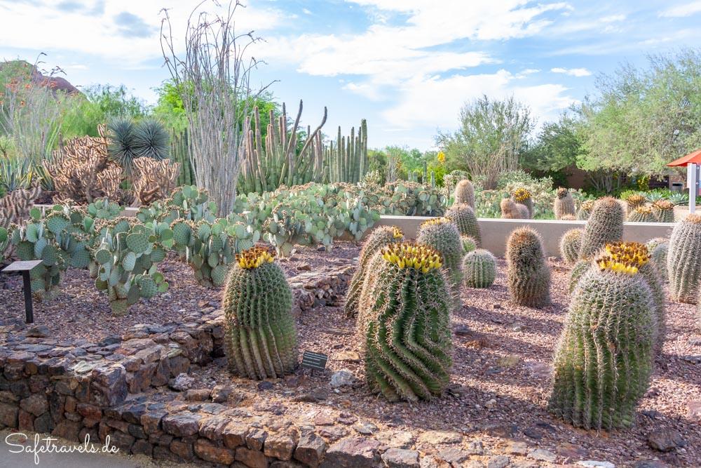 Desert Botanical Garden - Ottosen Entry Garden