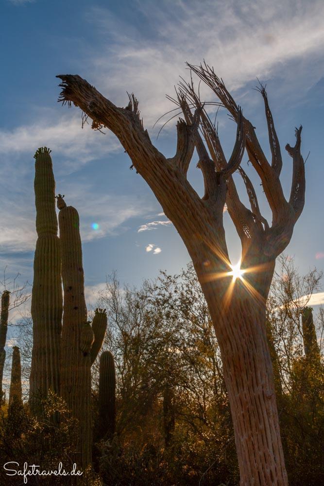 Desert Botanical Garden - Sonnenuntergang