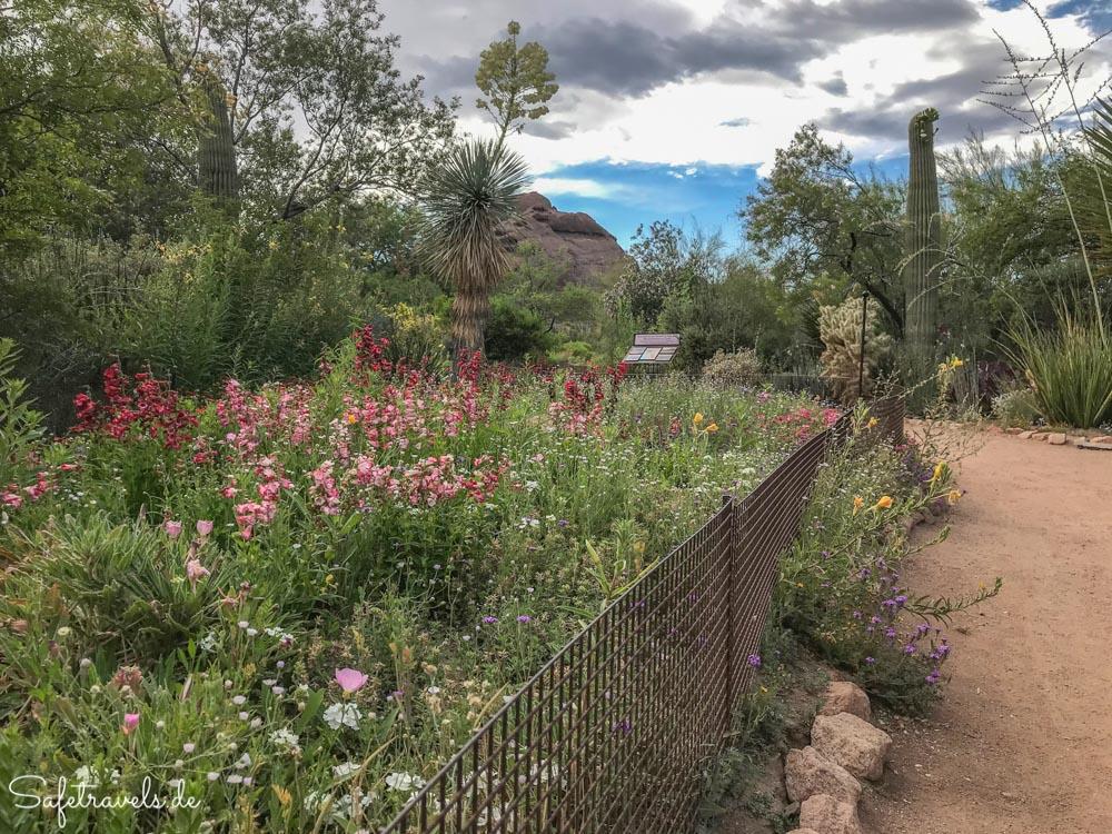 Desert Botanical Garden - Wildblumen und Kakteen