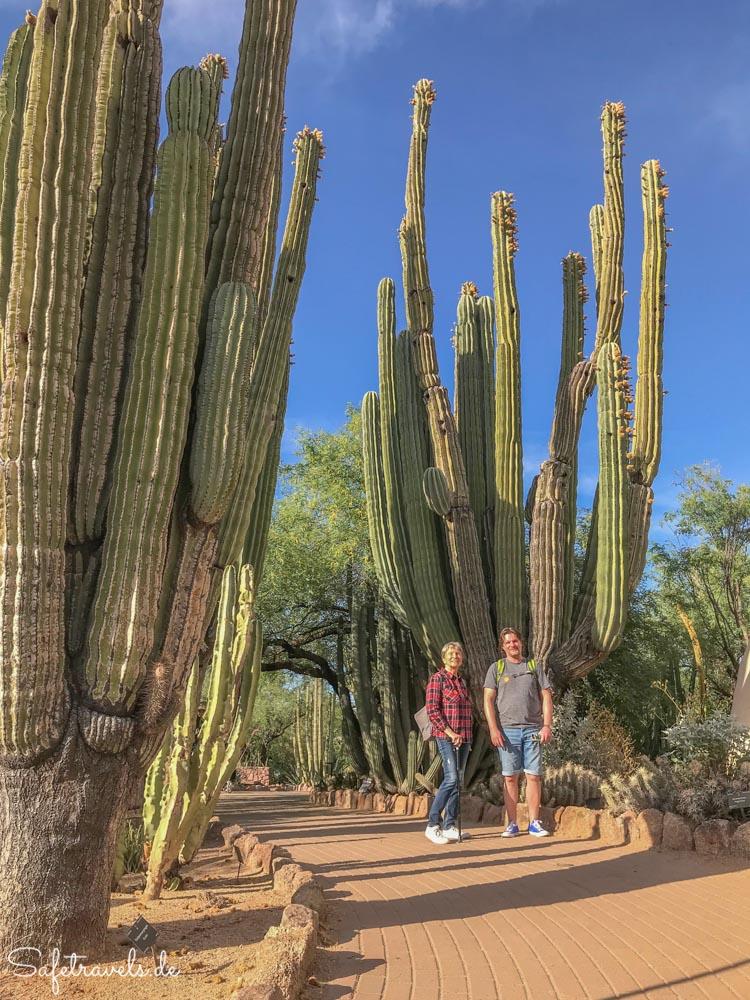 Desert Botanical Garden - auf dem Desert Discovery Loop Trail