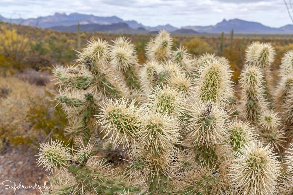 Organ Pipe Cactus National Monument - Ausblick vom Campground Perimeter Trail