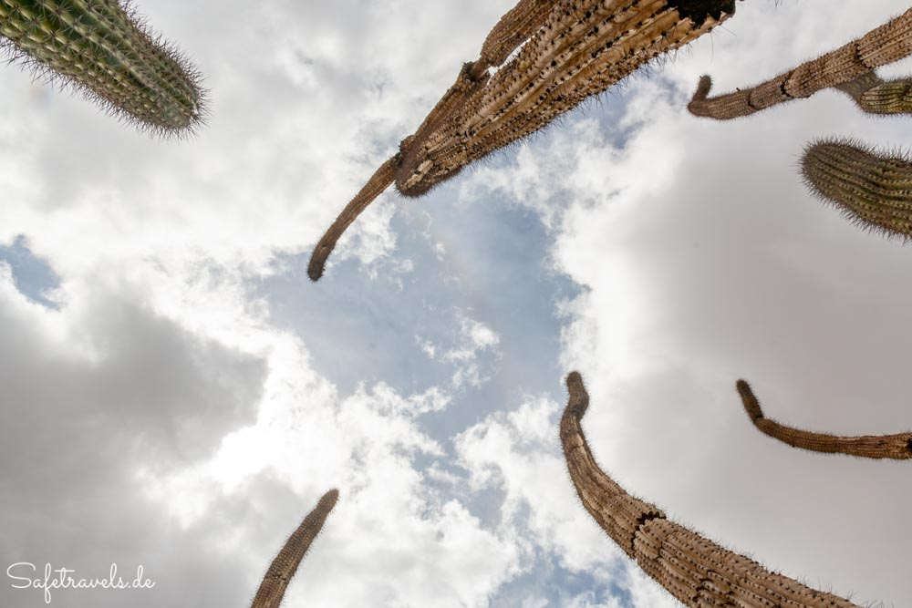 Organ Pipe Cactus National Monument - Organ Pipes & Skies