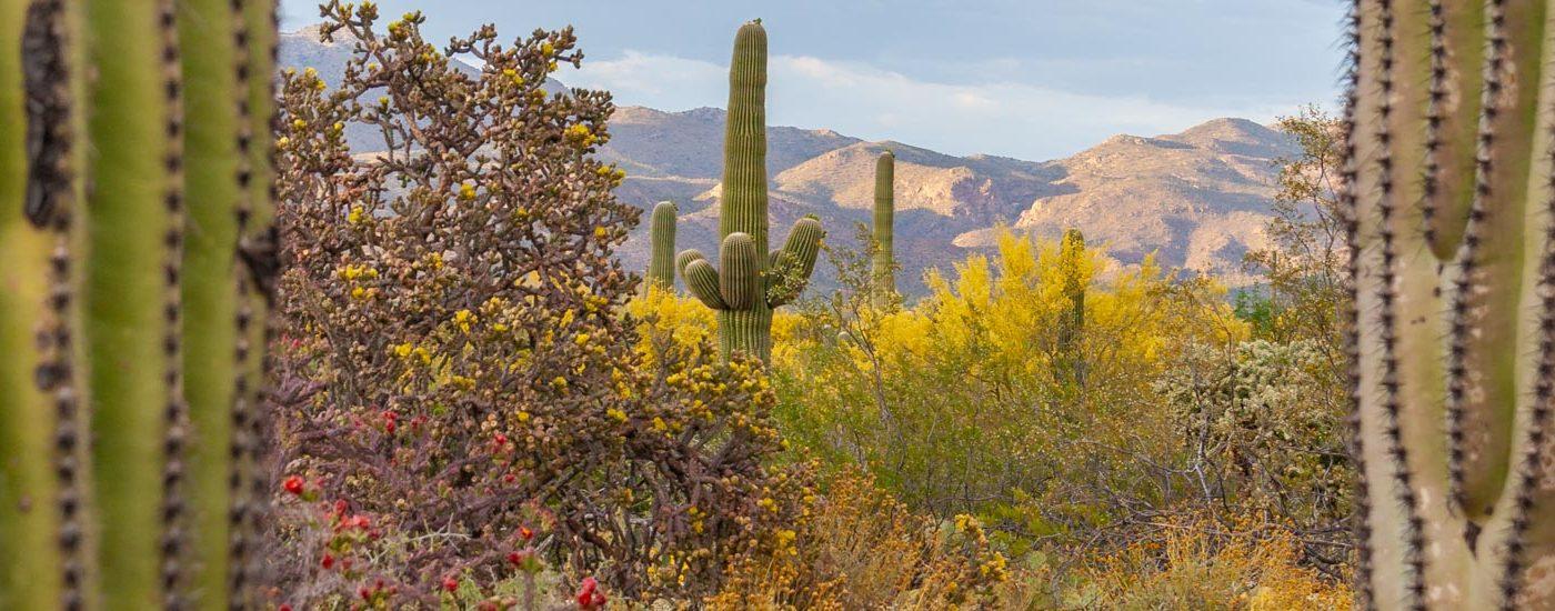 Saguaro Blog Titel
