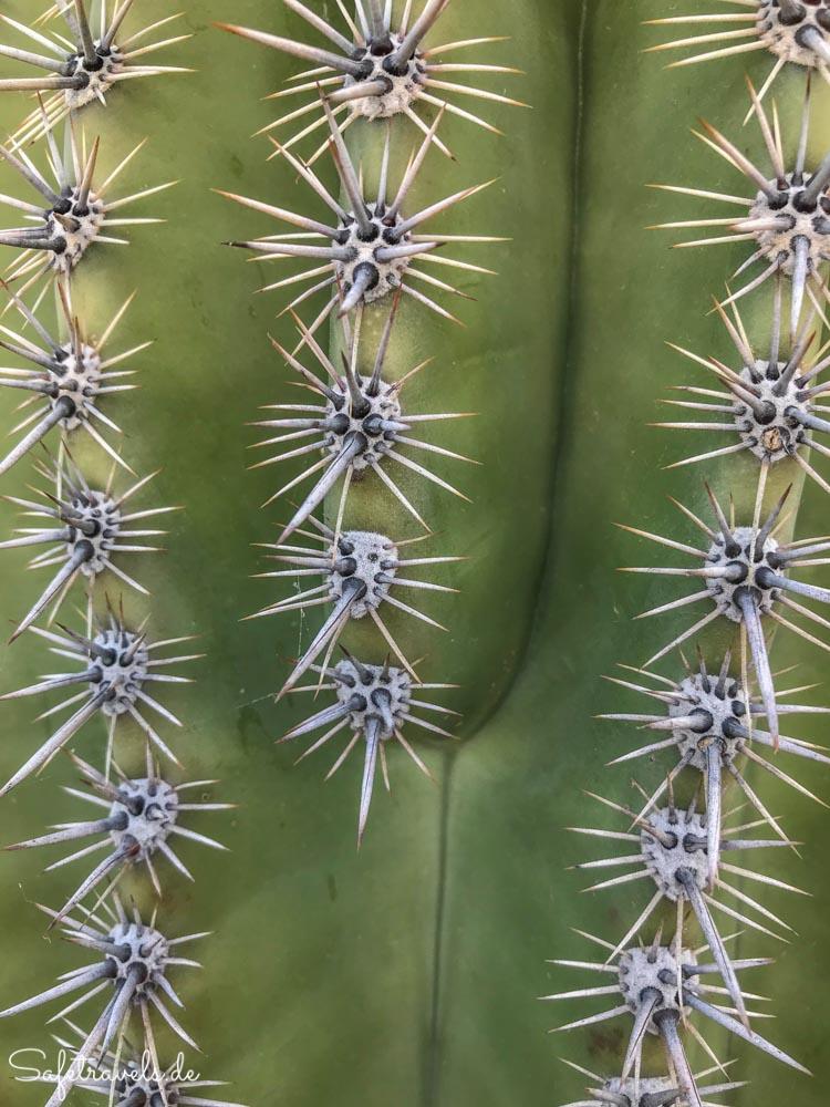 Saguaro Nahaufnahme