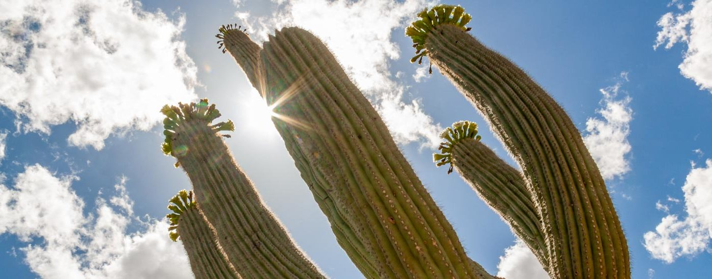 Saguaro National Park Blog Titel