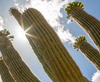 Saguaro National Park Blog Titel