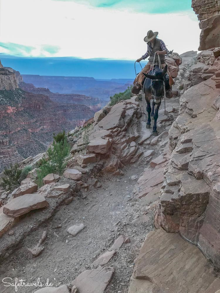 Grand Canyon - weiblicher Wrangler auf dem South Kaibab Trail