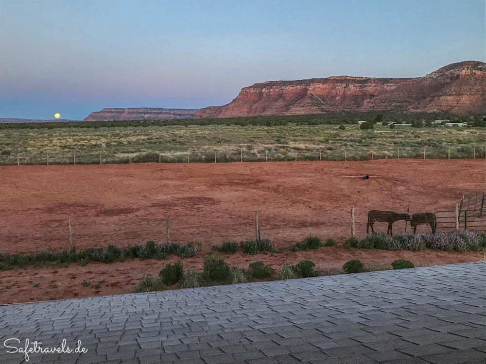 Kanab - Die Burros kuscheln am Morgen