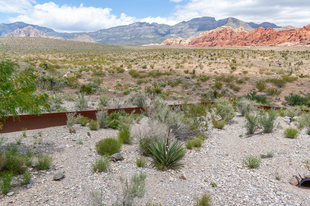 Red Rock Canyon - Wüstenschildkröten mit Aussicht