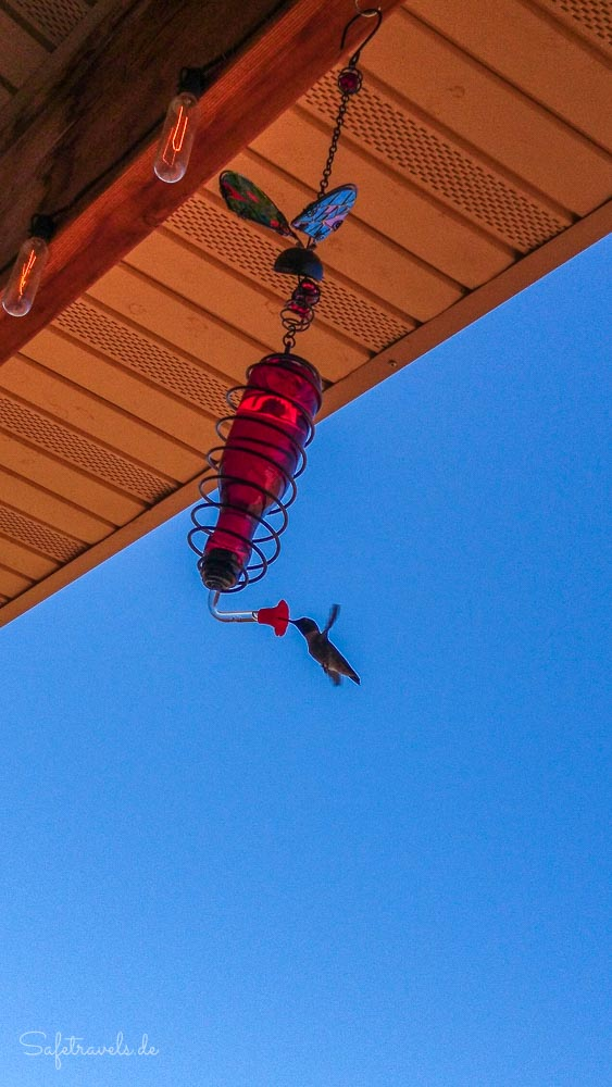 Kolibri auf der Terrasse der Burro Flats High Desert Lodge