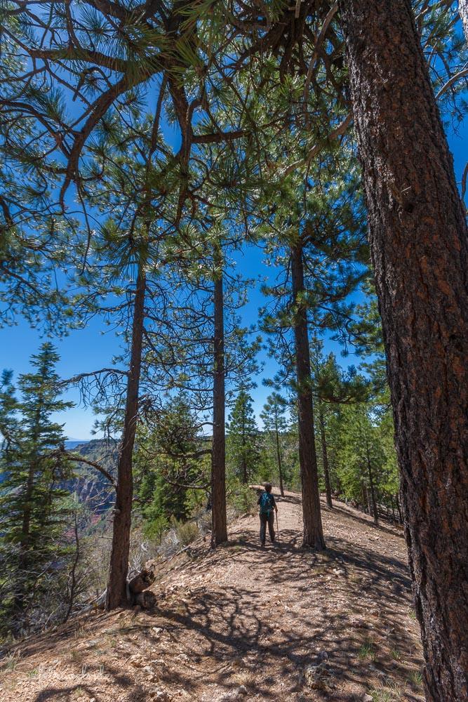 Ponderosa Pines - Wandern am Grand Canyon North Rim