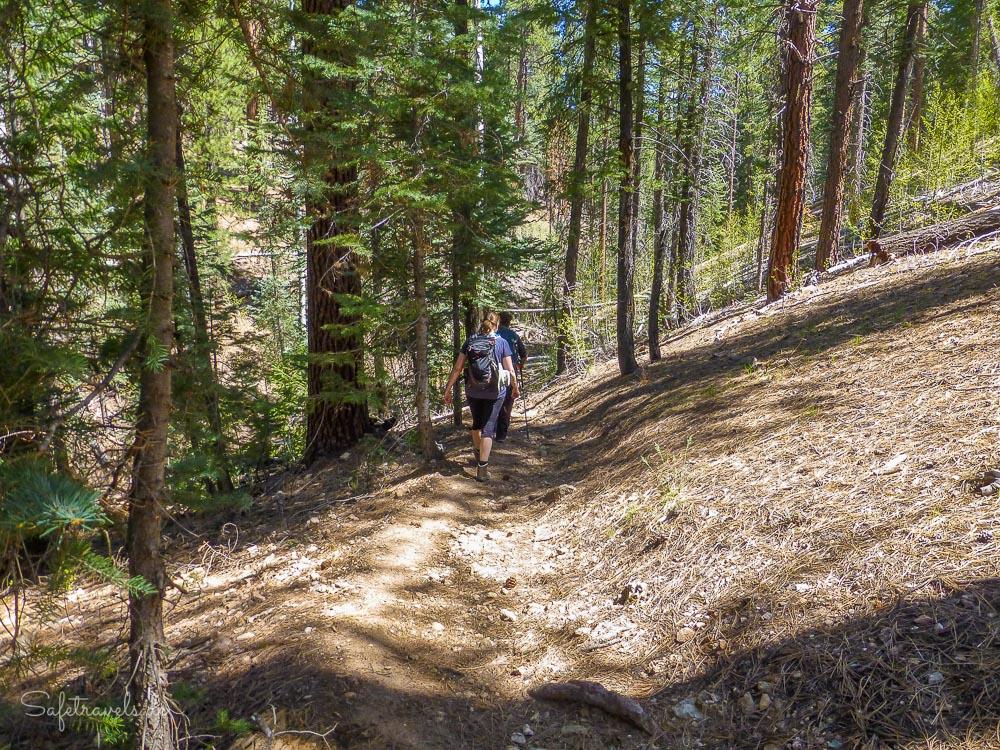 Widforss Trail durch dichte Wälder