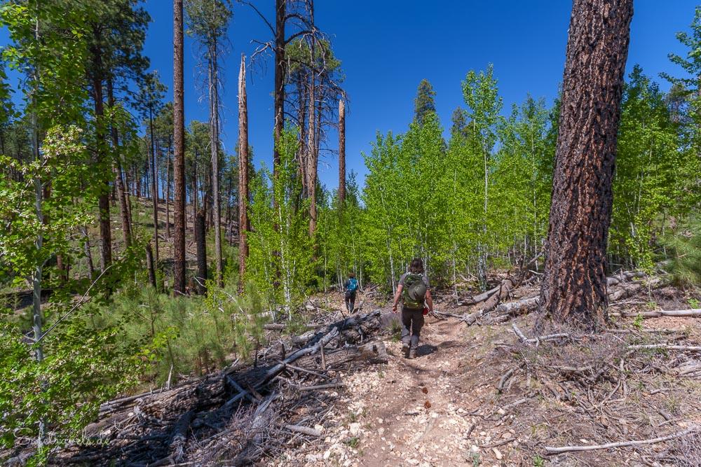 Widforss Trail durch schöne Wälder am North Rim