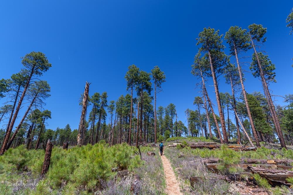 Widforss Trail