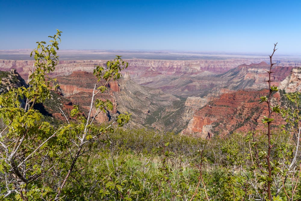 Roosevelt Point - Weitblick am Grand Canyon North Rim