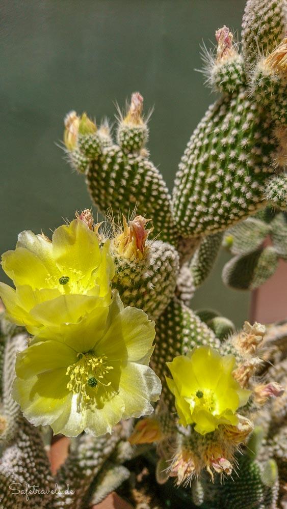 Airbnb in Sedona - Kaktus im Garten