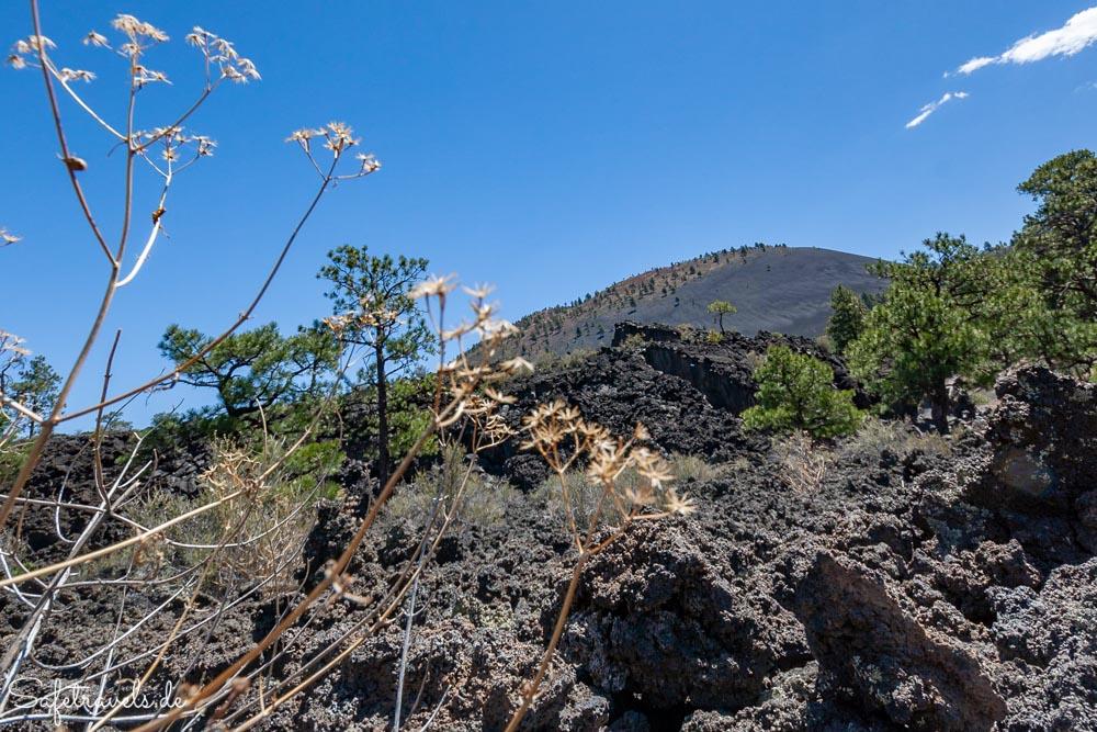 Sunset Crater Vulkankegel bei Flagstaff
