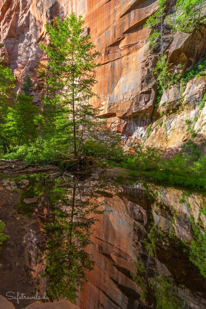 West Fork Oak Creek - Reflektion