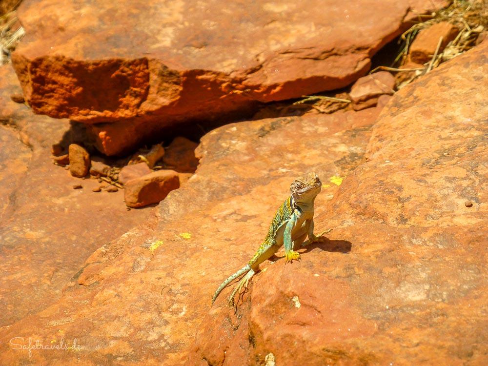 Wildlife auf dem Doe Mountain
