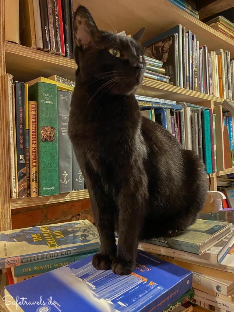 Katze posiert in der Alta Acqua Libreria in Venedig